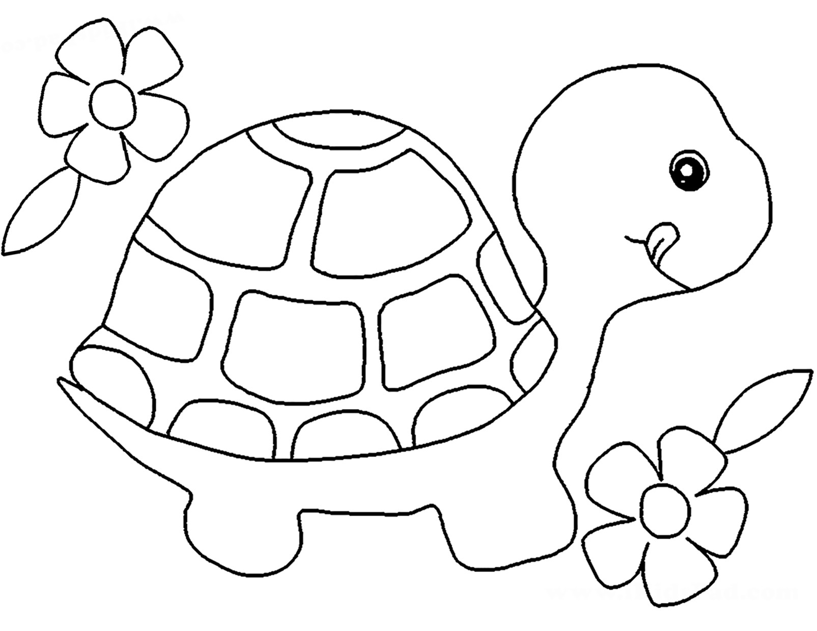 Baby turtle pages coloring pages for Turtle coloring pages