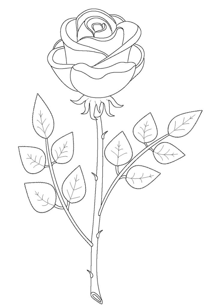 Раскраска для девочек - роза