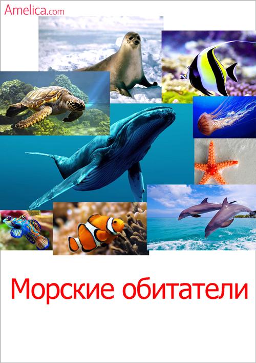 картинки морские обитатели, картинки рыбы для детей, карточки домана скачать