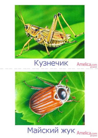 насекомые в картинках для детей, детские картинки насекомых