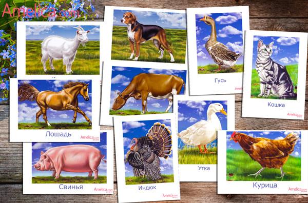 домашние животные картинки, животные для детей, развивающие карточки скачать