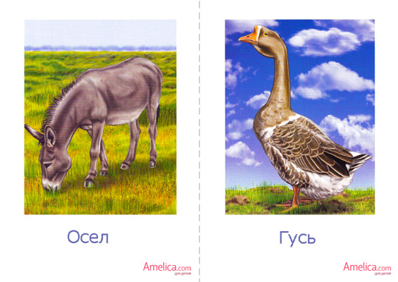 домашние животные картинки для детей, скачать, бесплатно