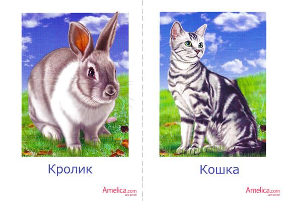 Животные на английском с картинками и транскрипцией 6