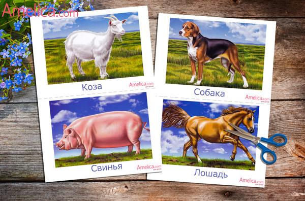 животные для детей, развивающие карточки скачать, распечатать, карточки домашние животные