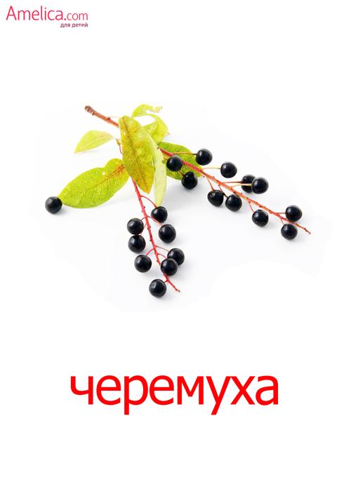 ягоды картинки для детей, изучаем ягоды с ребенком