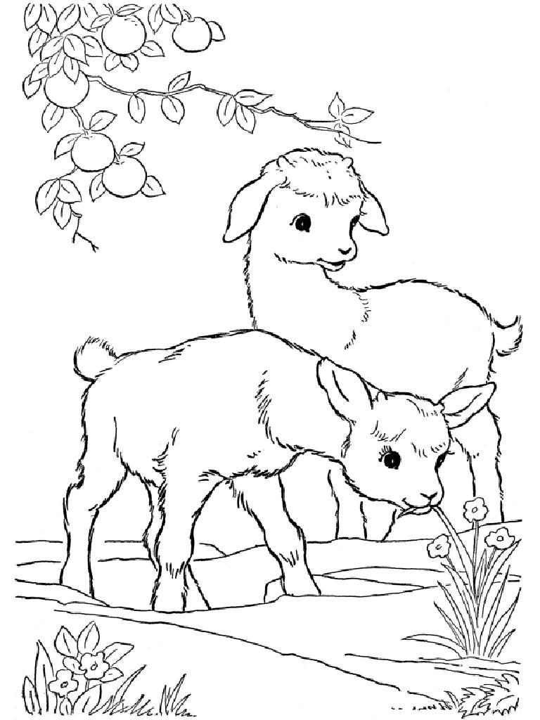 Раскраска для девочек животные распечатать - 7