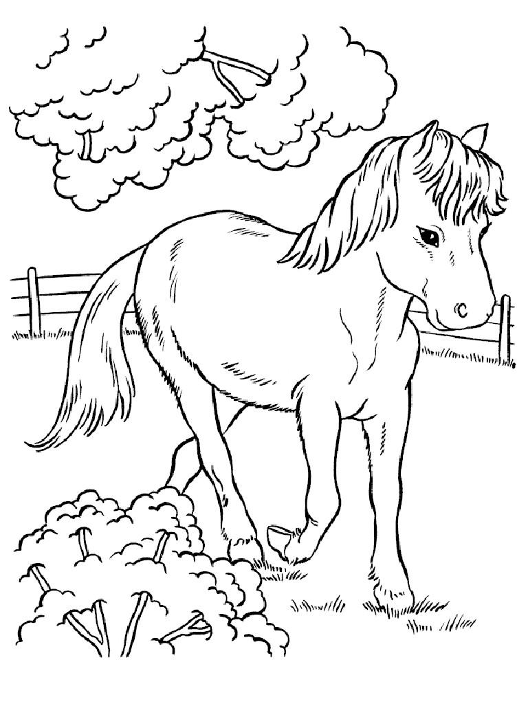 раскраски для девочек, распечатать для девочек, раскраска животные