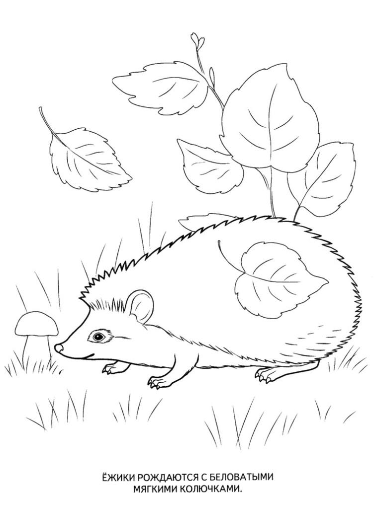 Игры о животные раскраска