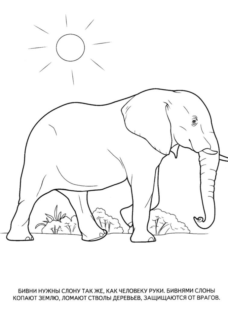 картинки раскраски животные