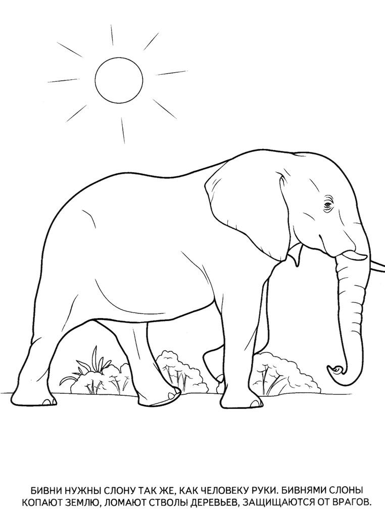 Картинки для детей лев