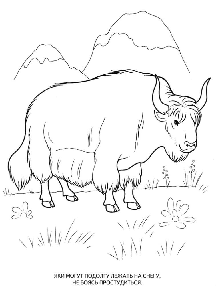 раскраски животные распечатать для детей