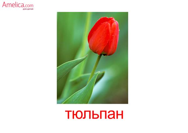 цветы картинки, карточки домана цветы, картинки цветы,
