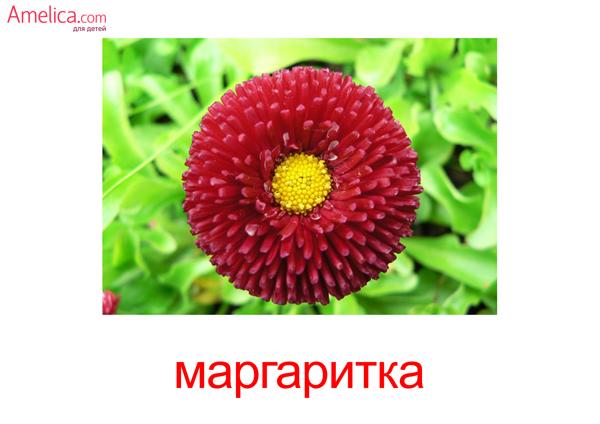 картинки цветы для детей, карточки Домана цветы, скачать