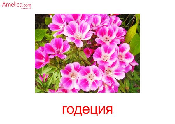 цветы картинки для детей, карточки Домана цветы бесплатно