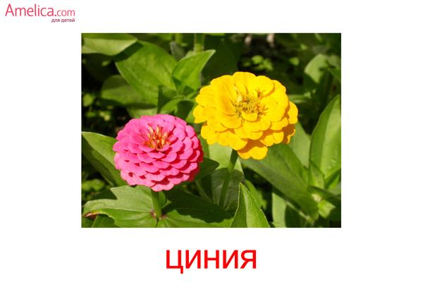 картинки цветы для детей, карточки Домана цветы, 1
