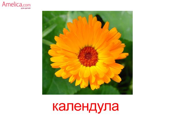 цветы картинки для детей, карточки Домана цветы, скачать