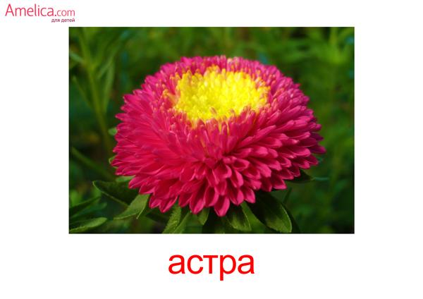 цветы картинки для детей, карточки Домана цветы