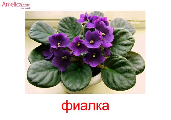цветы картинки для детей, карточки Домана цветы, 10