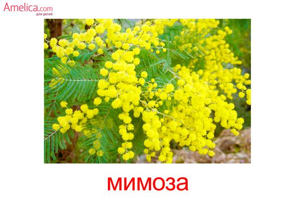 цветы картинки для детей, карточки Домана цветы, 7