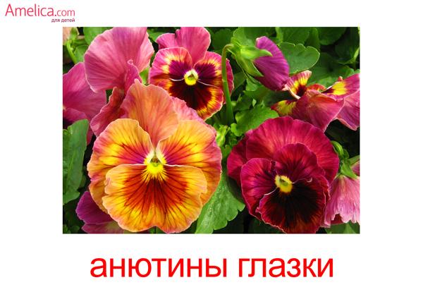 цветы картинки для детей, карточки Домана цветы, 6