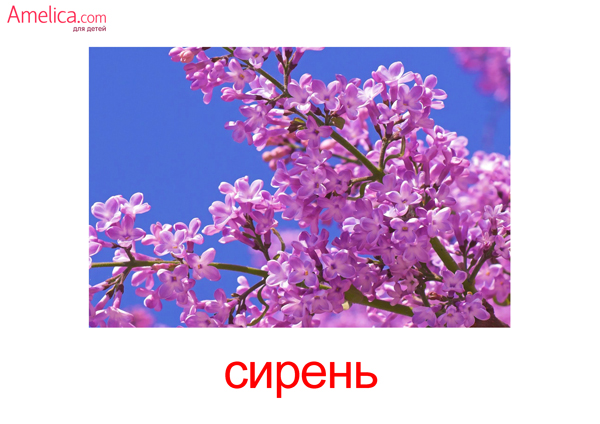 цветы картинки для детей, карточки Домана цветы скачать, беспоатно