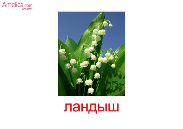 цветы картинки для детей, карточки Домана цветы, 5