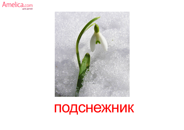 цветы картинки,карточки домана цветы, полевые цветы, травы