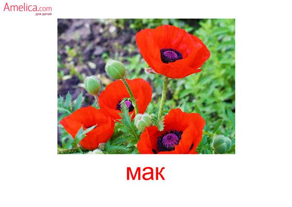 цветы картинки для детей, карточки Домана цветы, 4
