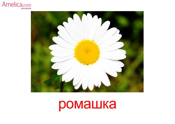 цветы картинки, карточки домана цветы, полевые цветы, травы