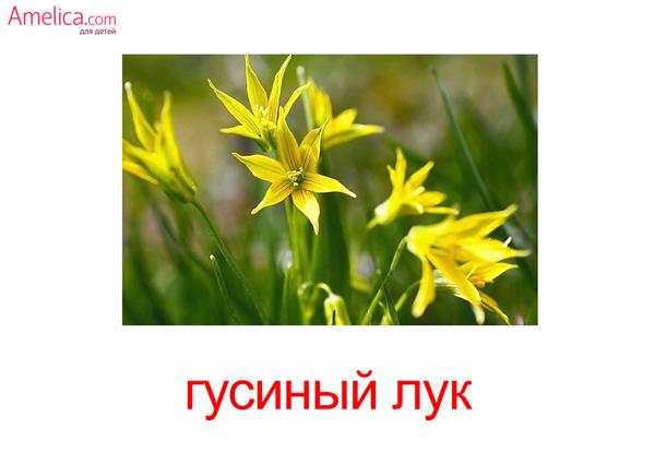 карточки домана цветы, полевые цветы, травы