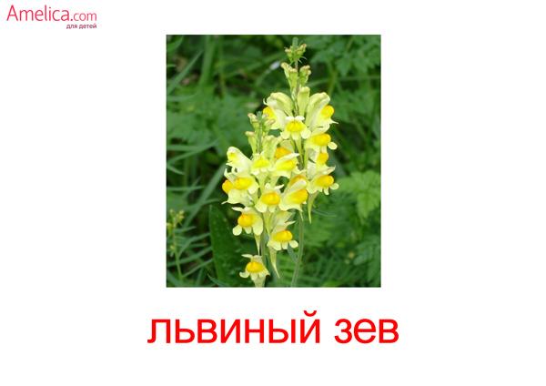цветы для детей с названием, карточки домана скачать