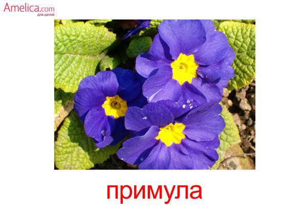картинки цветы для детей, карточки Домана цветы, скачать бесплатно