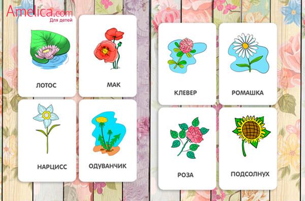 картинки для детей распечатать, развивающие карточки цветы для детей 1,2,3,4 года