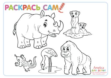 раскраски распечатать бесплатно, развивающие раскраски, раскраски животные, раскраски морские обитатели