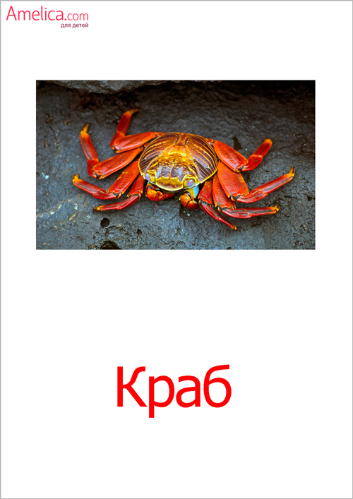 картинки подводный мир, картинки морские обитатели, картинки рыбы для детей