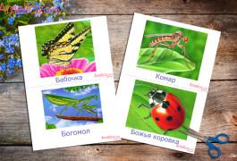 насекомые в картинках для детей, развивающие карточки с насекомыми для дома, детского сада