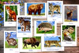 дикие животные, животные в картинках для детей, развивающие карточки для детей