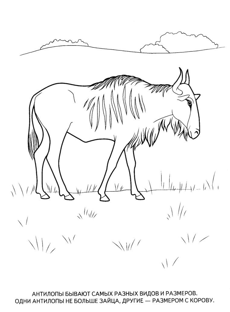 Раскраски Диких Животных